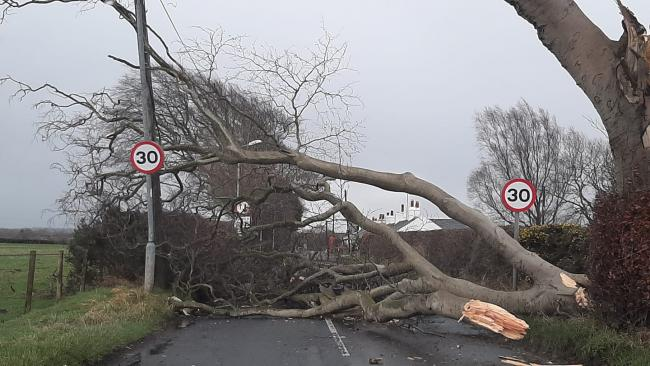 Huge tree closes Irvine road as Storm Ciara leaves trail of destruction