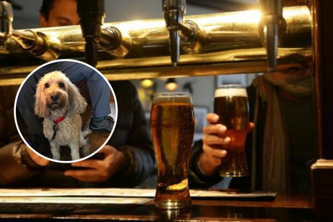 Ayrshire pubs where you can now treat yourself to a pint after walking your dog