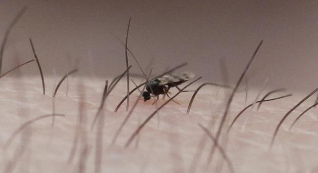 Midge repellents: Top tips to keep Scotland's biting beasties at bay