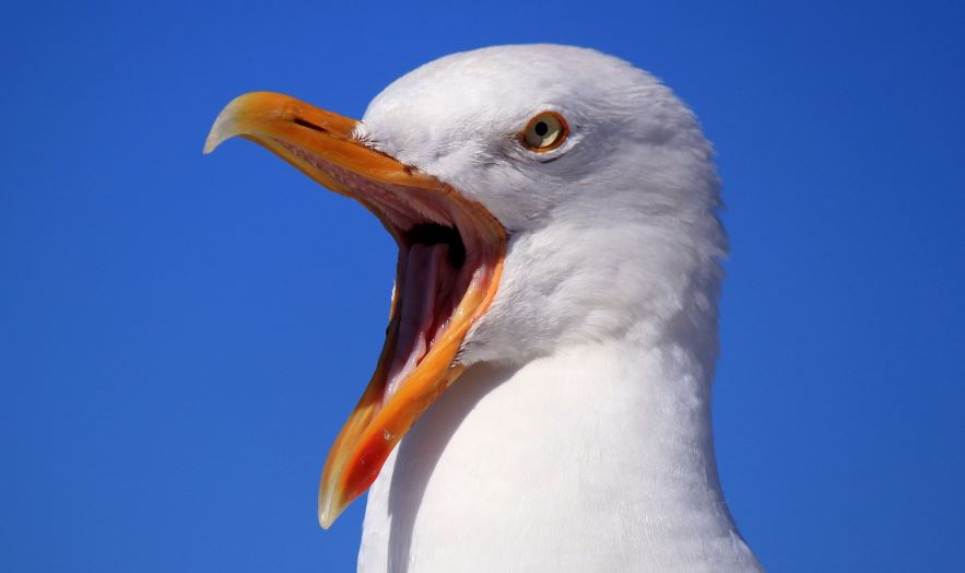 North Ayrshire residents face £80 fine for feeding seagulls